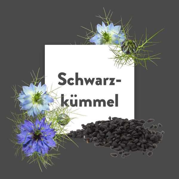 Pflanze-des-Monats-Schwarzk-mmel