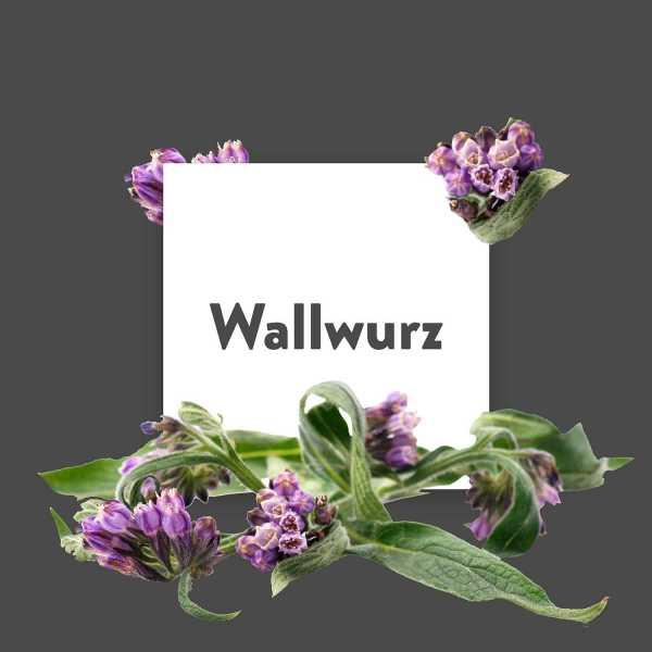 Pflanze-des-Monats-Wallwurz